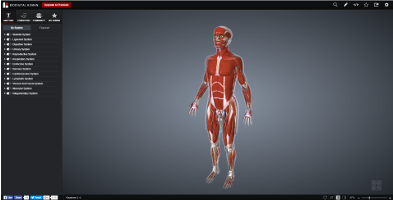 Screenshot of the human in BioDigital